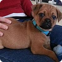 Adopt A Pet :: Skippy - Avondale, PA
