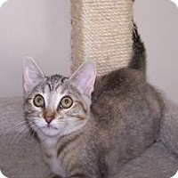 Adopt A Pet :: K-Mellon-Honeydew - Colorado Springs, CO
