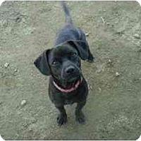 Adopt A Pet :: Snoopy - Clovis, CA
