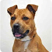 Adopt A Pet :: Cora - Port Washington, NY