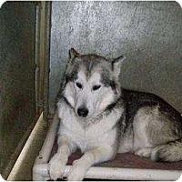 Adopt A Pet :: Kiera - Augusta County, VA