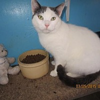 Adopt A Pet :: Sailor Jack - Coos Bay, OR