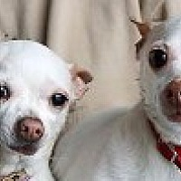 Adopt A Pet :: Buddy & Cheeka - Georgetown, CO