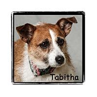 Adopt A Pet :: Tabitha - Warren, PA