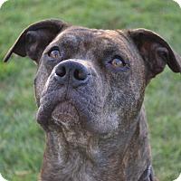 Adopt A Pet :: Mario - Lake Odessa, MI