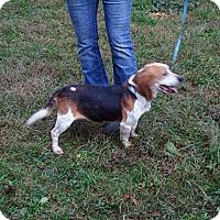 Adopt A Pet :: Jimmy - Dumfries, VA