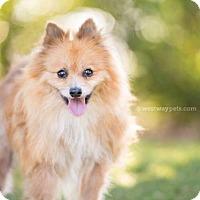 Adopt A Pet :: Timmy - El Cajon, CA