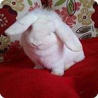 Adopt A Pet :: Luna - Columbus, OH