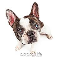 Adopt A Pet :: Max - Tempe, AZ