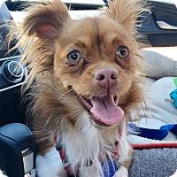 Adopt A Pet :: Lennie - Los Angeles, CA