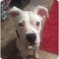 Adopt A Pet :: Loretta - Brentwood, TN