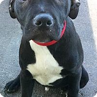 Adopt A Pet :: Neptune - Phoenix, AZ