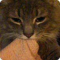 Adopt A Pet :: Arkyn - Acushnet, MA