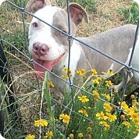 Adopt A Pet :: Piper - Charlotte, NC