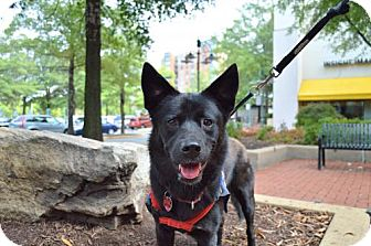 Retriever (Unknown Type)/Shepherd (Unknown Type) Mix Dog for adoption in Washington, D.C. - Joni (Has Application)