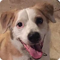 Adopt A Pet :: Tanner - St Louis, MO