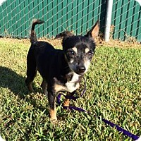 Adopt A Pet :: Buster - Beaumont, TX