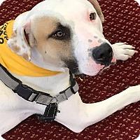 Adopt A Pet :: Blake - Walden, NY