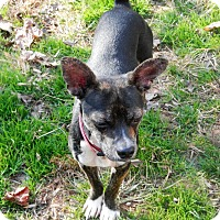 Adopt A Pet :: Frazier - North Wilkesboro, NC