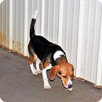 Adopt A Pet :: Rambo - Athens, AL