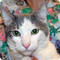 Adopt A Pet :: Stuart - Wildomar, CA