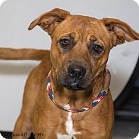Adopt A Pet :: Reba - Martinsville, IN