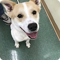 Adopt A Pet :: Dakota - Sparta, NJ
