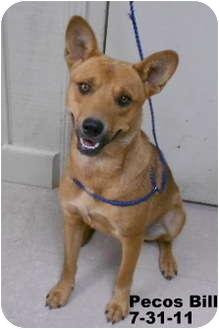 Australian Cattle Dog Mix Dog for adoption in Leitchfield, Kentucky - Pecos Bill-sponsored