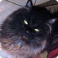 Adopt A Pet :: Gino - Davis, CA