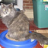 Adopt A Pet :: Princess - Fort Wayne, IN