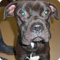 Adopt A Pet :: Popeye - Hamilton, ON