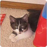 Adopt A Pet :: Nate - Modesto, CA
