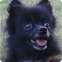 Adopt A Pet :: Lexus - Gum Spring, VA