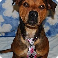 Adopt A Pet :: Remy - Waupaca, WI
