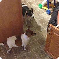Adopt A Pet :: Rocky - Spring City, PA