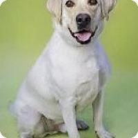 Adopt A Pet :: Baxter - Brooklyn, NY