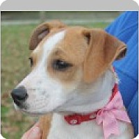 Adopt A Pet :: Danni - Pittsboro, NC