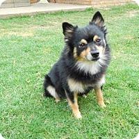 Adopt A Pet :: Tony - West Orange, NJ