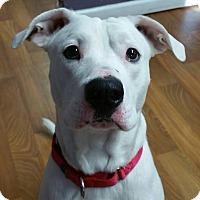 Adopt A Pet :: Taz - Lisbon, OH