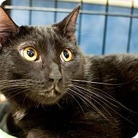 Adopt A Pet :: Alvin - Gainesville, FL