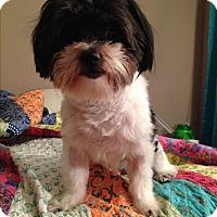 Adopt A Pet :: Casey - Schaumburg, IL