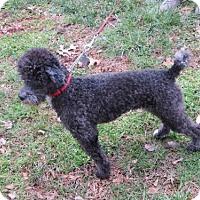 Adopt A Pet :: Hope - Huddleston, VA