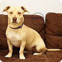 Adopt A Pet :: Simone or Ciara - Apache Junction, AZ