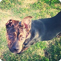 Adopt A Pet :: Bailey - Sacramento, CA