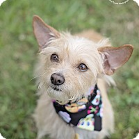 Adopt A Pet :: Zoie - Kingwood, TX