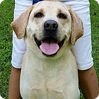 Adopt A Pet :: Levi - Buckeystown, MD
