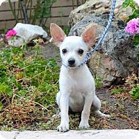 Adopt A Pet :: Prairie Dawn - Los Angeles, CA