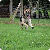 Adopt A Pet :: Pat (bonded to Vanna) - Nashua, NH