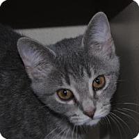 Adopt A Pet :: Jive - Ridgeland, SC