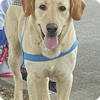 Adopt A Pet :: Jake - Cleveland, TX